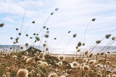 Ecosystem, Sky, Field, Grass Family stock photography