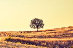 Ecosystem, Sky, Grassland, Field royalty free stock image