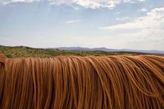Ecosystem, Sky, Grassland, Field stock photo
