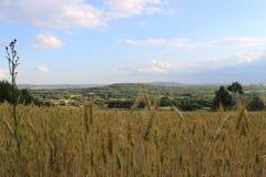 Ecosystem, Sky, Grassland, Prairie royalty free stock photo