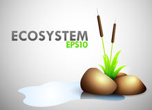 Ecosystem theme. With pond, stone and elephant grass Stock Photo