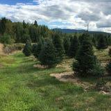 Ecosystem, Tree, Vegetation, Nature Reserve royalty free stock image