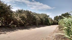 Ecosystem, Vegetation, Nature Reserve, Road