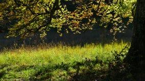 Ecosystem, Vegetation, Woodland, Nature Reserve royalty free stock photo