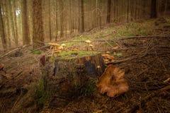 Ecosystem, Woodland, Forest, Tree stock photo