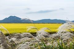 Ecosystem, Yellow, Grassland, Field stock photo