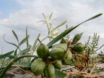 ecosystems Dunas de areia litorais imagens de stock