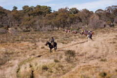 Ecotourism horse riders on trail. Ecotourism horse riders in Australian Alpine National Park royalty free stock photos