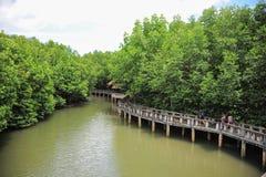 ecotourismskogmangrove Arkivbild