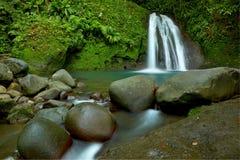 Ecrevisses auxiliares da cascata do La Foto de Stock