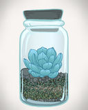 Ector hand drawn succulent plant in glass terrarium. Hipster sty Stock Photo
