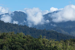 Ecuador cloud forest. Cloud forest in the Tena area of Ecuador royalty free stock photography