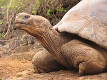 Ecuador-galapagoss Inseln der riesigen Schildkröte lizenzfreies stockbild