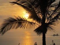 Ecuador-La Rinconada-Palmen-Schattenbild-Sonnenuntergang lizenzfreies stockbild