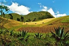 Ecuador landscape. Typical peaceful landscape in Ecuador with cows Stock Photo