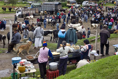 Ecuador - Otavalo Livestock Market Stock Images