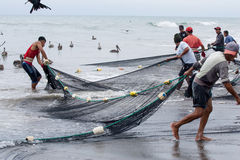 Ecuadorian fishermen pulling in their nets Royalty Free Stock Photography
