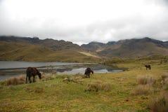 Ecuatoriaans nationaal park Royalty-vrije Stock Afbeeldingen