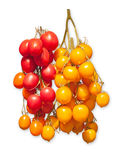 Ed and yellow tomatoes Royalty Free Stock Images