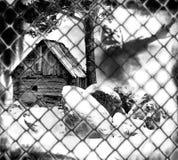 Edad avanzada, pequeña casa lamentable Imagenes de archivo