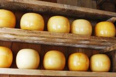 Edam cheeses. Round edam cheeses in Dutch cheese shop royalty free stock photo
