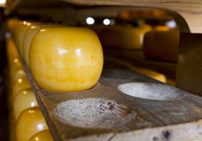 Edam cheeses on cheese farm Stock Photo