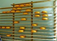 Edammer kaas op de planken in het Park Juli van Arnhem royalty-vrije stock foto