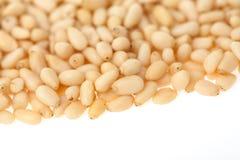 Сedar nuts Stock Images