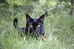 Eddie in het gras Royalty-vrije Stock Foto