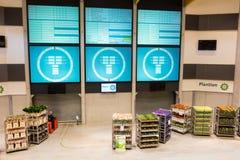 EDE, holandie - KWIECIEŃ 18, 2015: Kwiat aukcja bierze miejsce Zdjęcia Stock