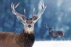 Edel hertenmannetje in beeld van de Winterkerstmis van de de wintersneeuw het bos stock fotografie