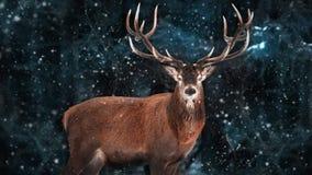 Edel hertenmannetje in een sneeuw bos Natuurlijk de winterbeeld stock afbeeldingen