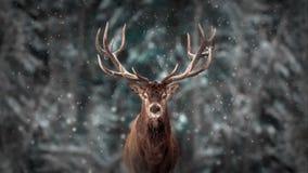 Edel hertenmannetje in landschap van de winterkerstmis van de de wintersneeuw het bos Artistieke stock foto