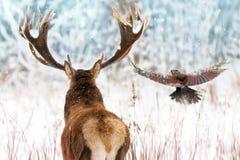 Edele herten met grote hoornen en raaf tijdens de vlucht in een beeld van de Kerstmiswinter van de de winterfee bos royalty-vrije stock fotografie