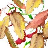 Edelkastanieblatt Blumenlaub des Blattbetriebsbotanischen Gartens Nahtloses Hintergrundmuster Lizenzfreie Stockfotografie