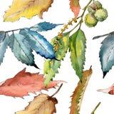 Edelkastanieblatt Blumenlaub des Blattbetriebsbotanischen Gartens Nahtloses Hintergrundmuster Lizenzfreies Stockbild