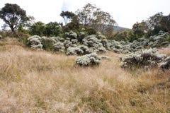 Edelweiss на browny холме Стоковое фото RF