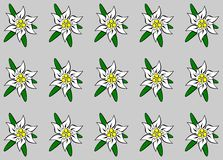 edelweiss предпосылки Стоковое фото RF