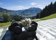 Edelweiss с панорамой стоковые изображения rf