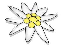Edelweiss royalty-vrije illustratie