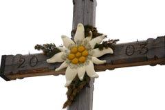 edelweiss Lizenzfreies Stockfoto