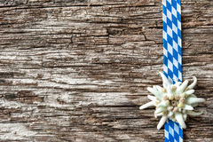 Edelweiss with Bavarian ribbon Stock Images