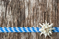Edelweiss with Bavarian ribbon Stock Image