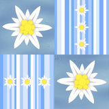 Edelweiss flowers on light blue stripes Royalty Free Stock Images