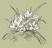 edelweiss Fond kaki Photographie stock