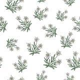 Edelweiss naadloos patroon Royalty-vrije Stock Foto