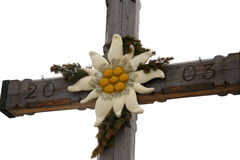 Edelweiss Royalty Free Stock Photo