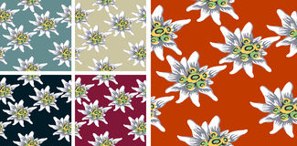 Edelweiss pattern pack Stock Photography