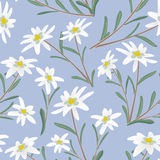 Edelweiss seamless pattern Stock Photography
