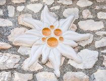 Edelweiss van klei wordt gemaakt die Royalty-vrije Stock Afbeelding